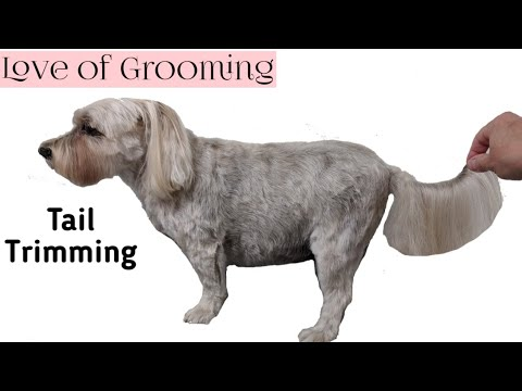 How to Trim a Tail on a Drop Coated Dog