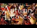 Autumn Leaves Les Feuilles Mortes