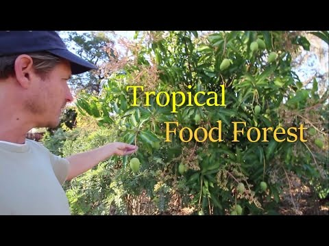 Incredible Food Forest at St Pete Ecovillage