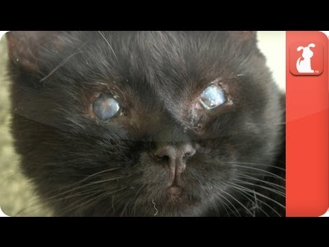 Baba the Blind Cat - Tails of Hope