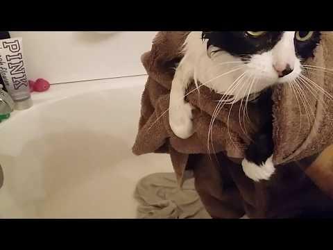 Clean kitties