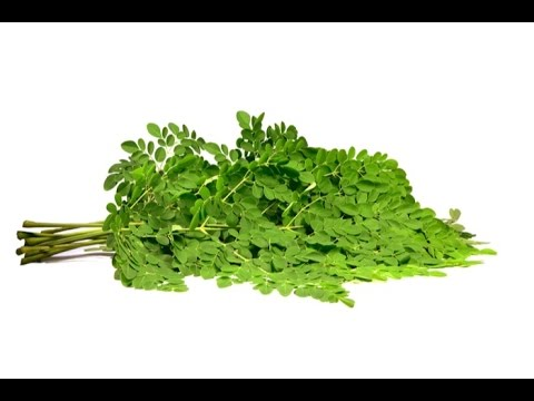 The Moringa Truth! - Moringa Oleifera Health Benefits Explained