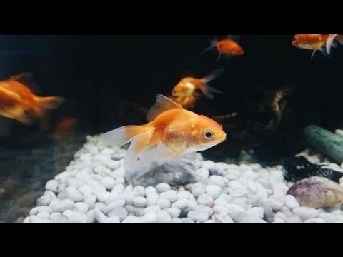 Top 10 Most Beautiful Freshwater Fish For New Fish Tank Owner