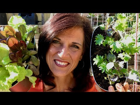 🍅 LIVE: 3 Easy-to-Grow Early Spring Veggies (Replay)