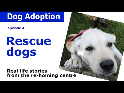 Rescue Dogs | Rehoming advice and real-life stories from Dogs Trust | Episode 4