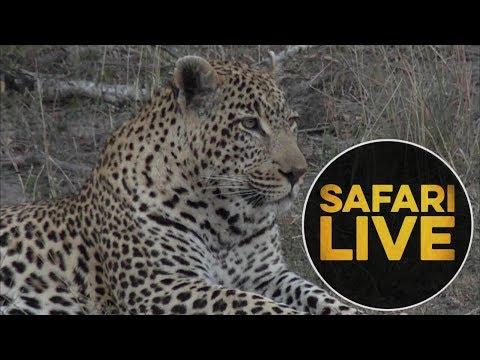 safariLIVE - Sunset Safari - June, 12. 2018