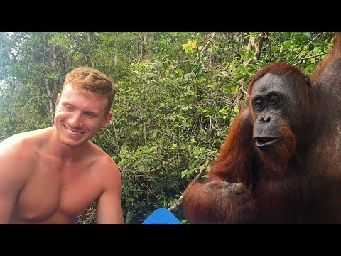Xxx Mp4 B TCH SLAPPED BY AN ORANGUTAN 👋🏻🙊😂 3gp Sex