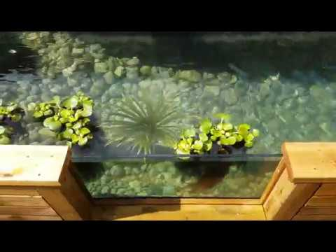 Koi Pond with Glass Viewing Window and Waterfall