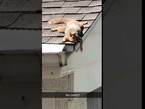 Sunbathin' Squirrel - Funny Video