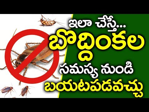 Get Rid of Cockroaches From Home in Telugu I Cockroaches Problem Solutions I Good Health and More