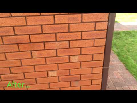 Ivy Roots Removal From Brick | Removing Ivy From House Walls