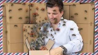 SOMEONE SENT ME BUGS IN THE MAIL [Fan Mail Unboxing]