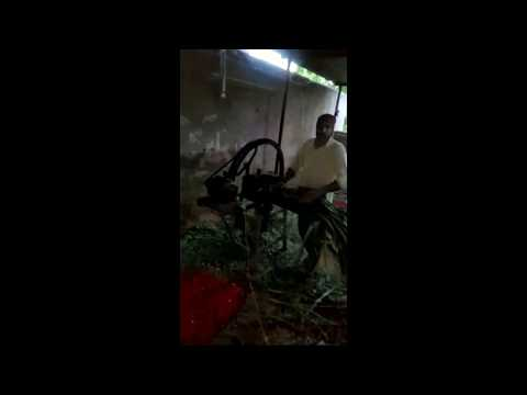राज श्योराण पशु के लिए मशीन से हरा चारा काटते हुए,