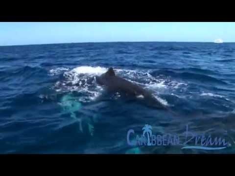 Whale Watching in Samana | Punta Cana Tours