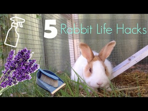 5 Rabbit Life Hacks