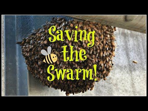 Saving the Bee Swarm!