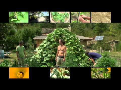 Permaculture-Jardin-Mulch-2011-(Terraced Garden Pumpkin)