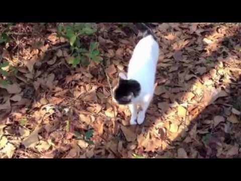 How to Stop Cats From Spraying - this worked for our Chuck!