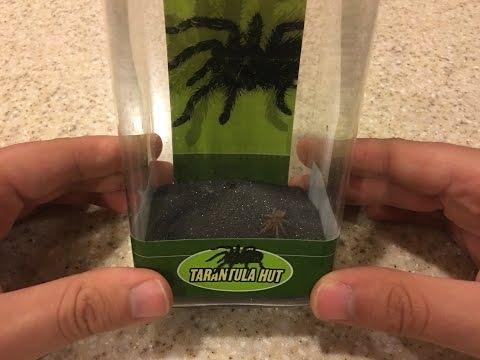 Tarantula Hut From Petco