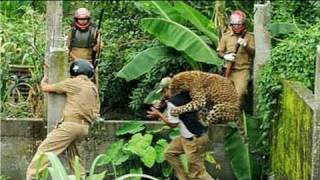 Download Caught on camera: Leopard attacks forest guard
