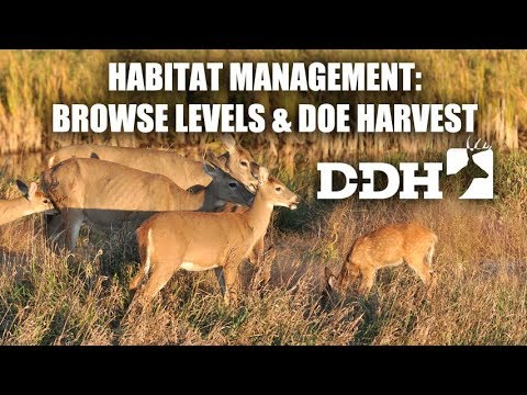Deer Habitat Management: Browse Levels and Doe Harvest | Steve Bartylla @deerhuntingmag