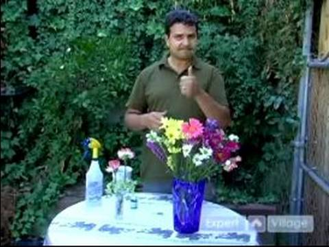 How to Keep Flowers Fresh : Basic Flower Maintenance: Tips for Preserving Cut Flowers