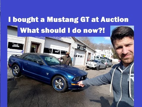 What should I do?! Mustang GT at a dealer only auction Vlog