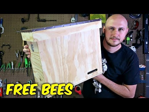 How to Build a Bait Hive?