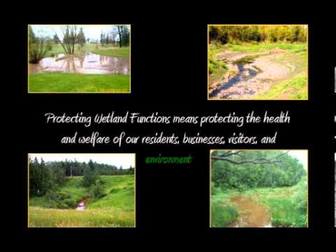 Importance of Wetlands to Superior: Special Area Management Plan (SAMP)