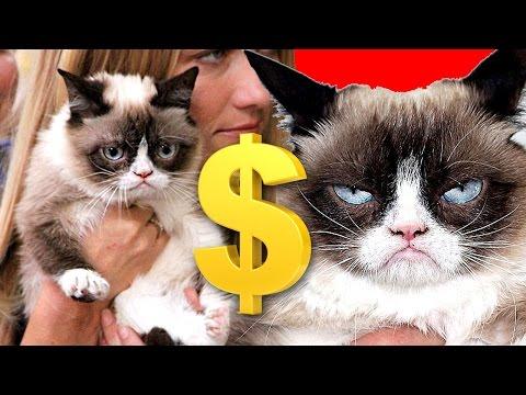 Grumpy Cat Has Made Over 100 Million Dollars