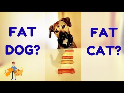 How to Tell if My Dog is Overweight or Cat Obese? (the 3 step body condition score)