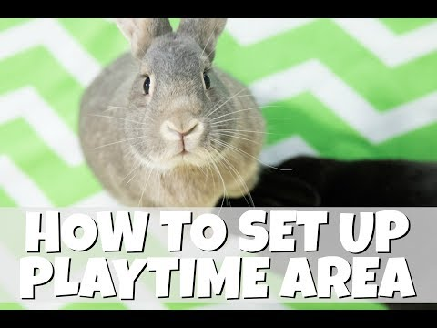 How I Set Up My Rabbit's Playtime Pen
