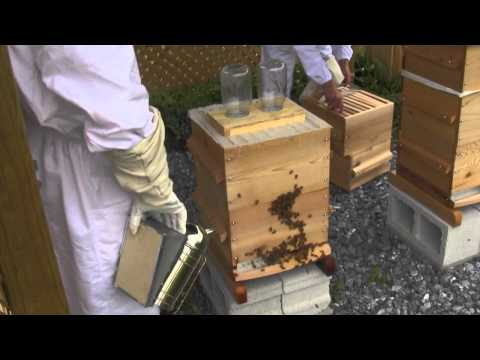 How to Add Space in a Warre Bee Hive
