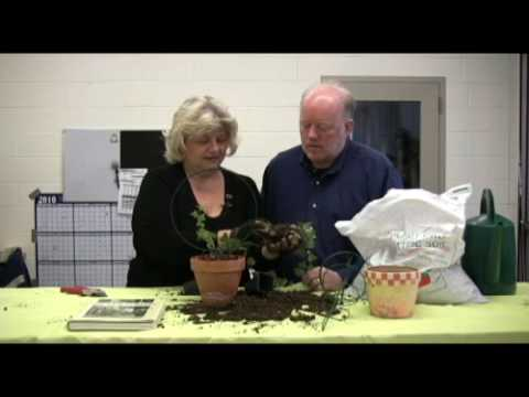 Digging with Doug: How to create ivy topiary