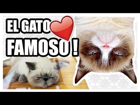 CAMBIO DE PLANES + ENCONTRAMOS AL GRUMPY CAT! | Vlog diario EsbattTV