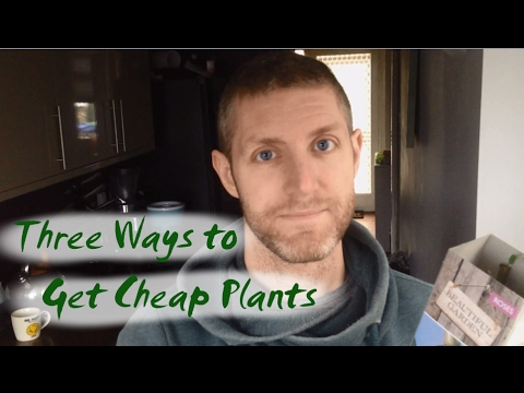 Three Ways to Get Cheap Plants | Fill Your Borders for a Bargain