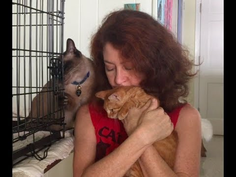 How to Socialize a Shy Kitten - Learning to Purr! FOXY   Part 2
