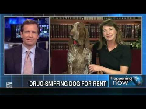 Drug-sniffing dogs for rent - Snitch Culture Furthered