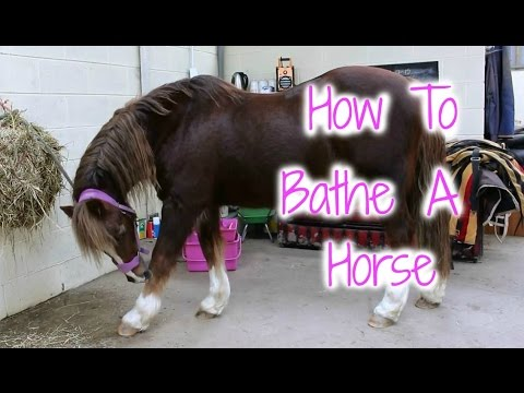 How to Bathe a Horse | Tutorial