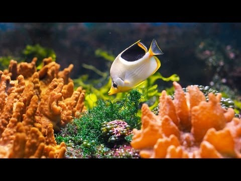 How to Clean a Saltwater Fish Tank | Aquarium Care