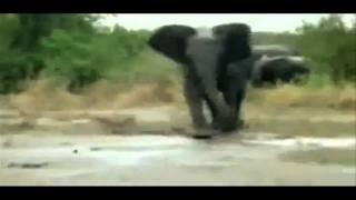BEST ANIMAL FAILS EVER!!!