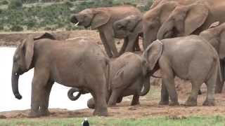 Addo National Park video - (Elephants; Lions; Buffalos; Kudu and many other wildlife)