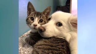 CATS vs DOGS competition; Who is FUNNIER?