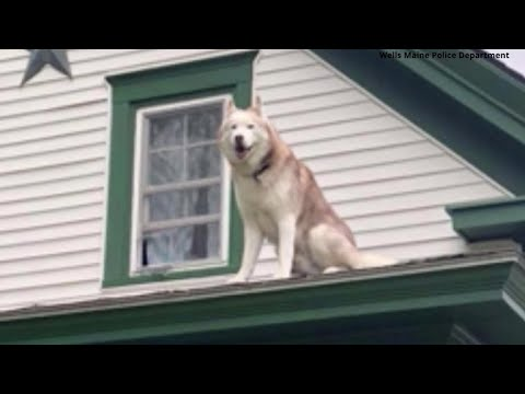 Dog stuck on roof gives kiss to firefighter who rescues him
