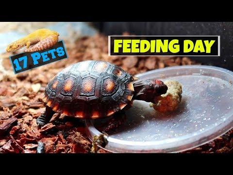 Feeding All My 17 Pets