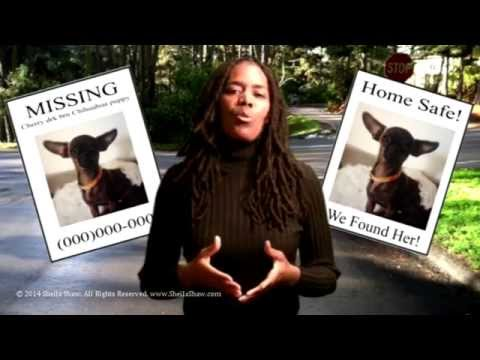 Pet Rescue – How to Find Your Cat or Dog - Strategic Sign Placement