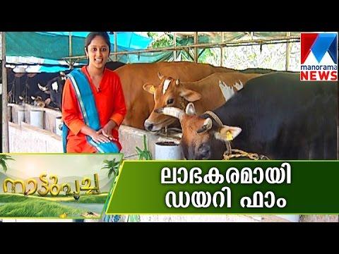 DairyFarm A Profitable business  | Manorama News