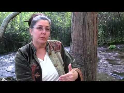 Water Crisis: Mt.Shasta Versus Crystal Geyser : Local Activists Demand Environmental Impact Report