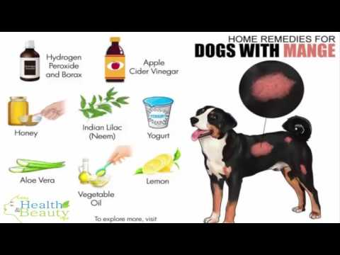 Home Remedies for Dogs with Mange