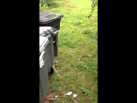 Squirrel flies out of trash can